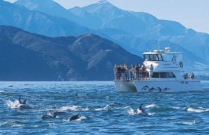 kaikoura-and-the-whale